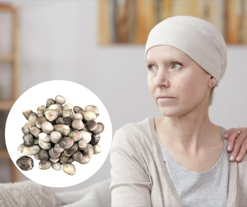 nấm rơm ngăn ngừa ung thư