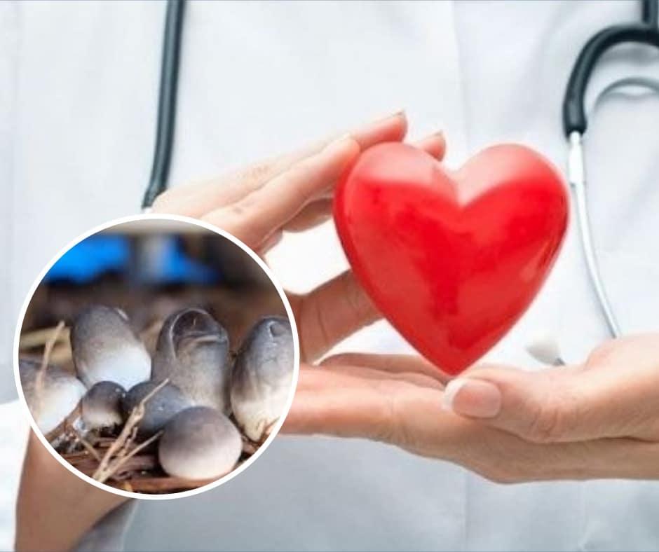 nấm rơm tốt cho tim mạch