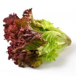 salad-lolo-tim