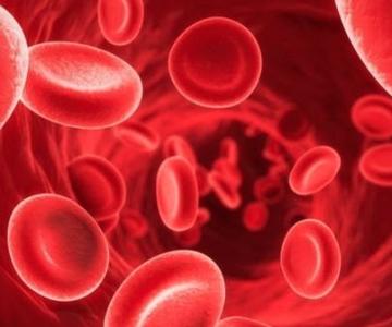 Thiếu máu do thiếu sắt ở tuổi 50+ và tác hại đối với cơ thể_5ef174fe6fb7f.png